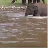 象は子供でも youtube