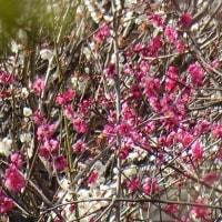 神様も驚いたバースデイ、本厄抜けて春の気配を感じつつ…