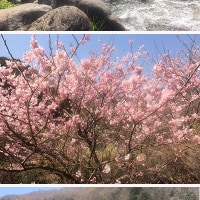 梅の宴が終わった湯河原・幕山でゆったり流れる時間を楽しむ。