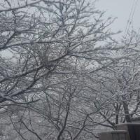 とうとうやって来た、、センター試験時期の寒波の雪