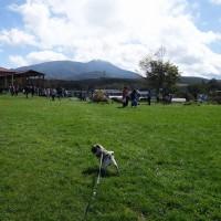 10月の信州滞在中もゴン太が喜ぶ長門牧場に
