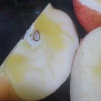 林檎をいただきました