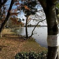 茨城県水戸市大塚池公園の2016年師走・・鳥インフルエンザ