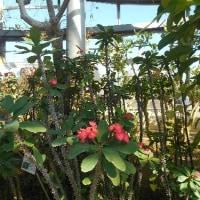 茨城県植物園へ