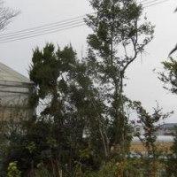 耕作放棄地からバラ園へ 2016.12.7
