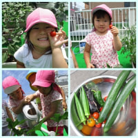 ✩野菜の収穫&カブトムシ✩