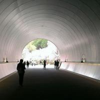 黒田園・MIHO MUSEUM・畑しだれ桜・山田牧場