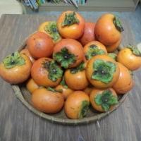 今年は、我が家の柿が豊作♪