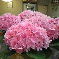 お花♪ 南ファミリーさんと♪  今季初!季節うどん