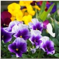 春が来た裏庭