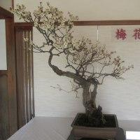 姫路城の西にある考古園に梅を観に
