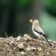 北海道の初日は鳥撮り