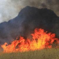 南阿蘇も野焼きが行われました。
