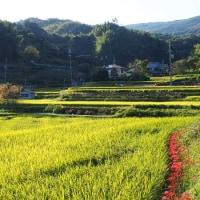 奈良県・平群町の「櫟原の棚田」