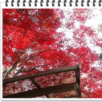 紅葉の御岳渓谷と奥多摩湖