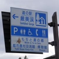一関市道の駅「厳美渓」のスイセン(水仙)2種  2017年3月25日(土)