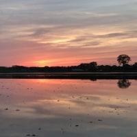 今日の田んぼからの夕焼け雲