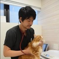 猫専門診療所
