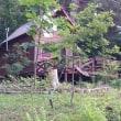 清里便り162 : 草刈りと蛍とホタルブクロ