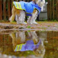 雨上がりの散歩