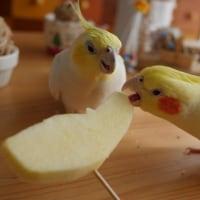 久しぶりに食べるよ☆りんごリンゴ