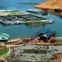 水源地で養殖を促進する   ベトナム