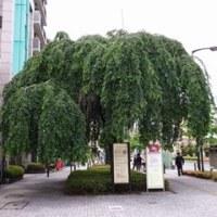 町田市街地をぶらり散歩