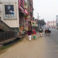 インド旅行 Ⅳ タージマハル