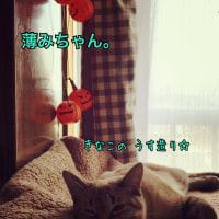 厚みちゃんと薄みちゃん☆