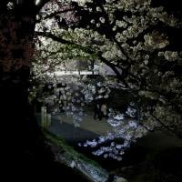 古城で  ~懐古園桜満開~ 3