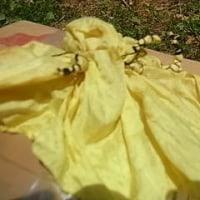 桑の葉は黄色