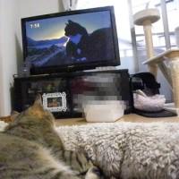 一緒にテレビを見るのものんびり~!