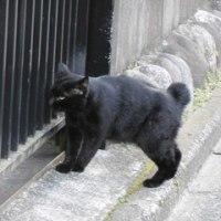 猫との出会い その128 東京都八王子市で、我が家で飼っている黒猫「くろこ」そっくりな猫と出会いました