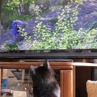 テレビっ子と構ってちゃん