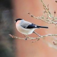 今はもう懐かしい今時分に撮った鳥達~~