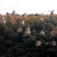 雀の食事待ち