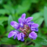 爽やかな初夏の花たち
