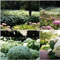 梅雨時の花たち(相模原北公園)その1