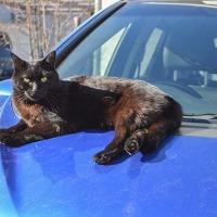 車上の令猫
