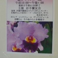 「第12回秋の洋ラン展」のオレンジウム・ポジョレー  2016年12月2日(金)