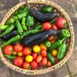 家庭菜園の収穫が最盛期