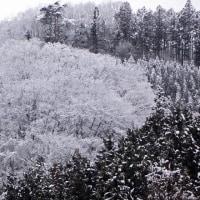 3月15日  異常低気圧で雪景色