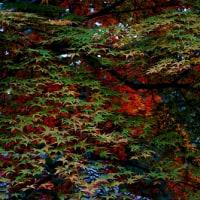 オータムカラー栗林公園