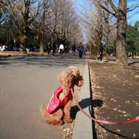 光が丘公園でお散歩