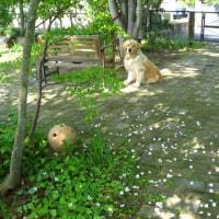 朝の庭にて