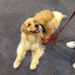 ボストンの人々に安全と安心をもたらす犬たち