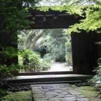 ほしだ園地~むろいけ園地~生駒山(合歓の木の花)