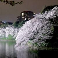 今年の桜ベストショット@千鳥ヶ淵