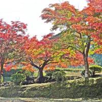 寺のある風景・15回目・丹波市・石像寺の秋・2016.11.12