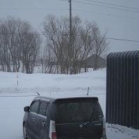 再び雪(>_<)